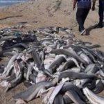 News von heute: Dutzende verstümmelte Baby-Haie an Kapstädter Strand entdeckt