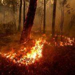 Buschbrände: Australien steht in Flammen – und es könnte noch über Monate weiterbrennen