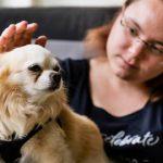 Chihuahua: Nepi ist Deutschlands kleinster Therapiehund. Sein Talent: Er kann Tränenflüssigkeit wittern