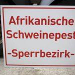 News von heute: Neue Schweinepestfälle nur 20 Kilometer von deutscher Grenze entfernt