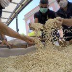 Italien: Hat der Islamische Staat 14 Tonnen Captagon-Tabletten geschmuggelt?