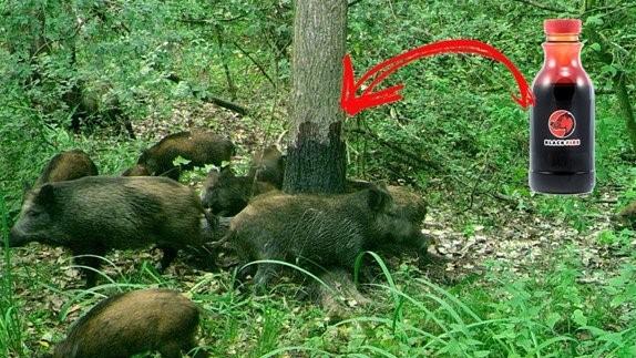 Lockstoff für Wildschweine aus Buchen-Teer mit zusätzlichen Düften