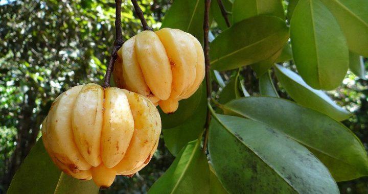 Ungewöhnliche Früchte mit schlankmachenden Eigenschaften
