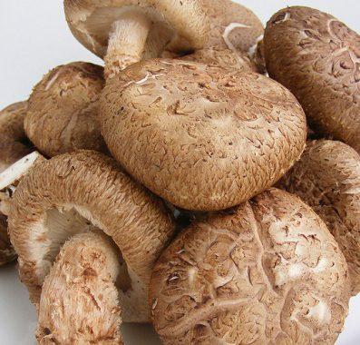 Sagen Sie Ja zu Shiitake-Pilze und stärken Sie Ihre Gesundheit
